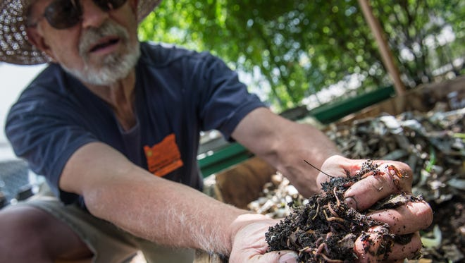 Master Gardener Larry Steele holds a handful of hardworking red worms, which turn kitchen waste into nutritious castings.