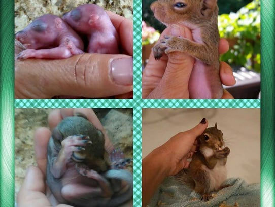 The two baby squirrels Maria Vaccarella got fined for
