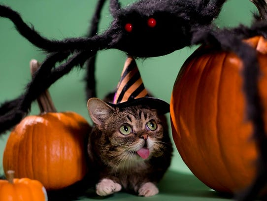 Lil BUB is ready for Halloween in this Instagram photo.
