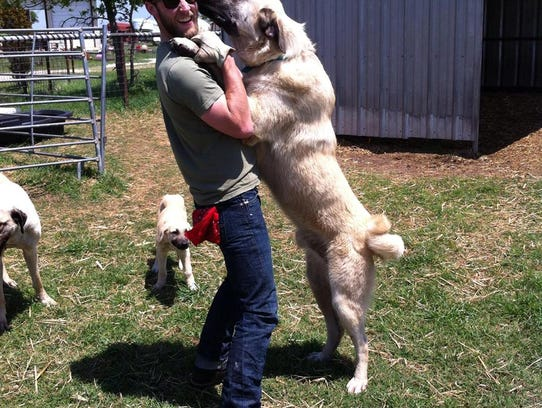 Oso, a Kangal, and Daniel Kinka.
