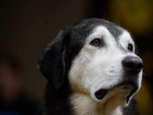 4-YDR-KP-102815-dog