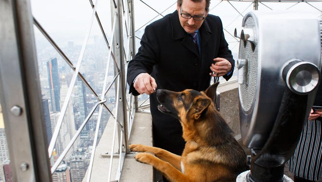 Handler and owner Kent Boyles and his German Shepard named Rumor look out from the observation deck of the Empire State Building on Wednesday, the morning after Rumor won Best In Show at the 141st Westminster Kennel Club Dog Show in New York City.