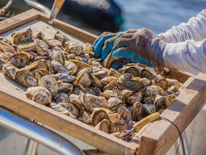 VIP tours of Pensacola Bay Oyster Company are available