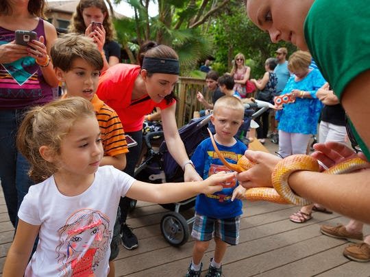 Four-year-old Maya Chernyaeva, of Bonita Springs, touches a partially albino corn snake at the Conservancy of Southwest Florida's Earth Day Festival on April 16, 2016, in Naples.