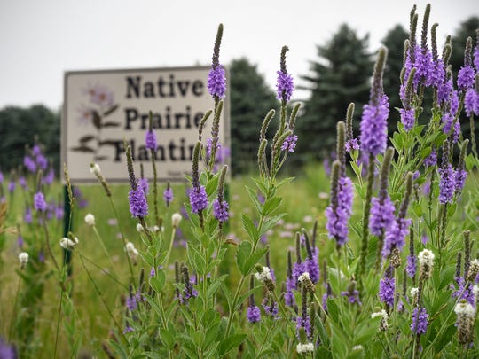 Wildflowers frame a sign designating the native prairie area Wednesday, July 19, at Realife Cooperative at Mueller Gardens in St. Cloud.