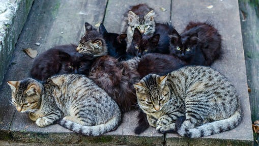 A stock image of stray cats.