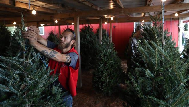 Brian Kipp, a tree salesman at the Havana Christmas Tree Farm, pulls a tree for a customer on Friday, Dec. 1, 2017.