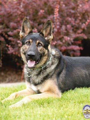 Keizer police K-9 Bruno died Wednesday from a severe bacterial infection.