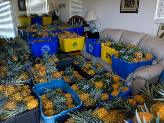 Mark Dellerman stores his weekly pineapple haul in