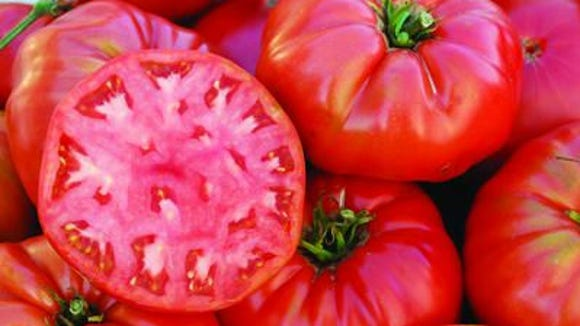 Shop for a variety of heirloom and hybrid tomatoes, peppers, eggplants and other popular vegetables as well as annuals, perennials and more at Putnam Master Gardener's plant sale.