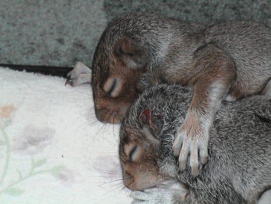 BRI 1218 squirrels.jpg