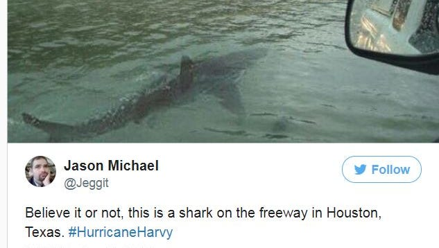 A tweet from @Jeggit on Aug. 28, 2017 appears to show a shark swimming in a Houston street. The image is fake.