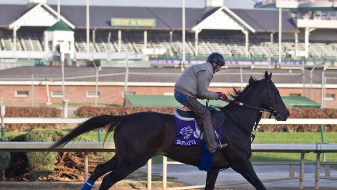Zenyatta trains toward the Breeders' Cup Classic at Churchill Downs Thursday, Nov. 4, 2010, in Louisville, Ky. (AP Photo/Morry Gash)