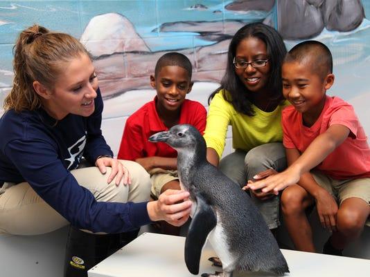 636028970754330556-African-penguin-encounter.JPG