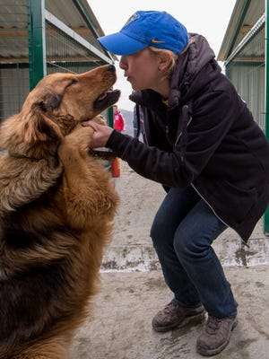 Nadezhda Mayboroda, who heads PovoDog dog shelter, plays with one of the rescued dogs during the Sochi 2014 Olympic Winter Games. Construction of a new facility, which was recently finished, will allow the shelter (which currently has about 100 dogs) to house up to 250 dogs.