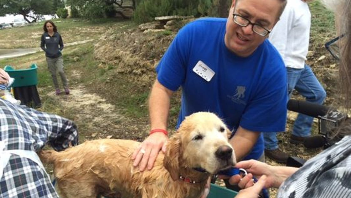 lifestyle travel tips learned traveling around world with dogs