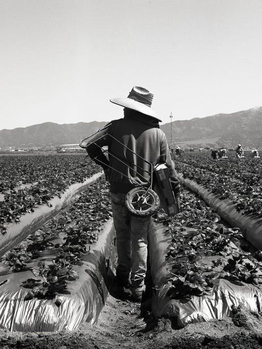 Field worker looking off