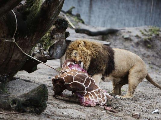 Zoo threatened for killing giraffe