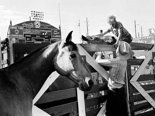 Vinegar, left, glances out over the infield at Sulphur Dell as Red gets the welcome treatment from Tex Townsend, bottom, and Eddie Gaines June 14, 1962. They were among the first to arrive at the ballpark in preparation for the first annual Nashville Rodeo. The Nashville Vols didn't have a team for the 1962 season.