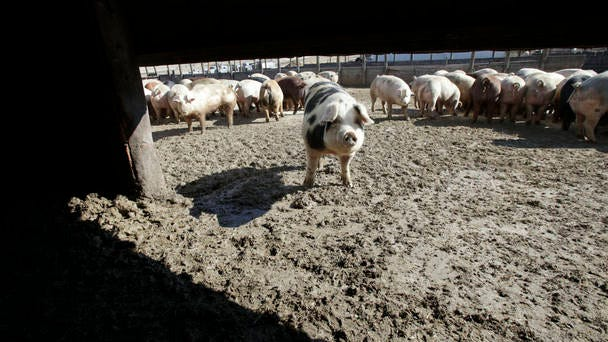 An application for a proposed confined animal feeding operation (CAFO) sited north of Maxwell in Indian Creek Township will be evaluated by the Story County Board of Supervisors at a 6 p.m. special evening Zoom meeting on Tuesday. File photo