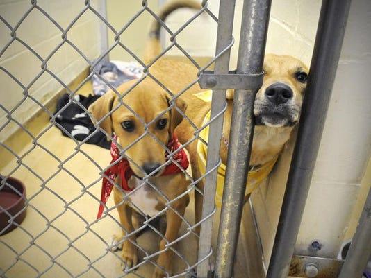 Exchange Saving Stray Dogs