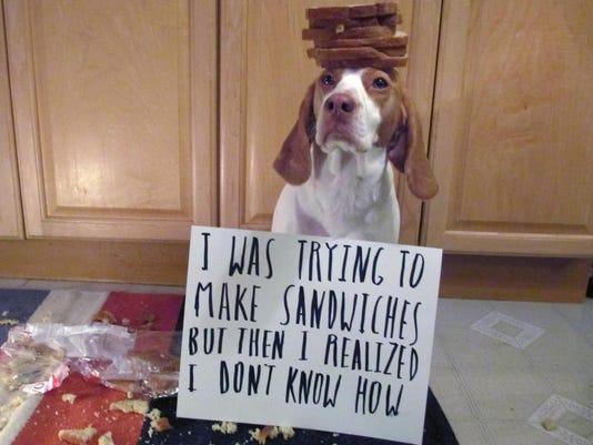 Pets-Dog Shame_Ball (1).jpg