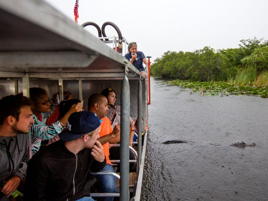 An alligator passes by during Kathy Britt's airboat tour at Everglades Holiday Park in Fort Lauderdale, Florida, on Friday, July 21, 2017. Britt is retired from airboating, but still gives tours about once a day when the park hits peak busyness. The park has the only covered airboats in the area, which allows them to still give tours, even in the rain.