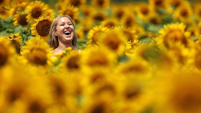 Last year's sunflower crop at Agricenter International drew visitors like Allison Carr, 18, who joked with her friends while walking through the radiant field. Families, photographers and bees turned out in big numbers to enjoy the festive scene.
