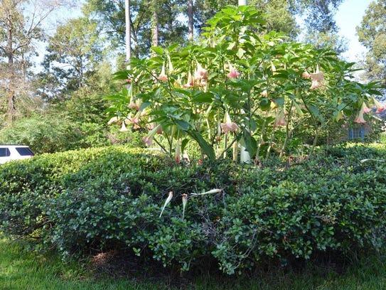 The Northwest Louisiana Master Gardeners' Le Tour des