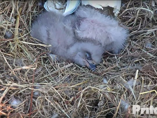 Screengrab from a live video feed shows the two eaglets