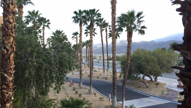 Trees billow in the wind in Palm Springs on Sunday. The Coachella Valley is under a wind advisory through Monday morning.