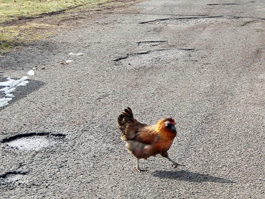 A chicken crosses Market Street in Neville. Residents