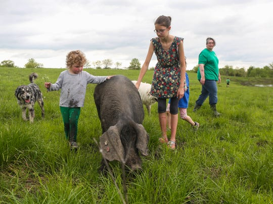 Angela Johnson, right, watches as her children play with one of the black pigs on their farm on Wednesday, May 11, 2016, in Derby.