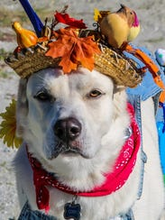 A contestant in the 15th annual Howl-O-Ween dog costume