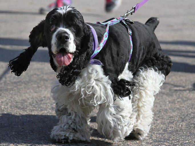 The Oshkosh Area Humane Society's Walk for the Animals was held at the Sunnyview Expo Center Saturday with participants encouraged to wear purple.