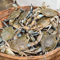 Wake up, lawmakers. Crab industry won't survive another 2018: EDITORIAL