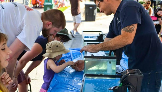 The annual Taloofa Fest in Midtown celebrates Tallahassee history and nature. A child at last year's event examines the display of Gulf Specimens Marine Lab, which will return for Saturday's festival.