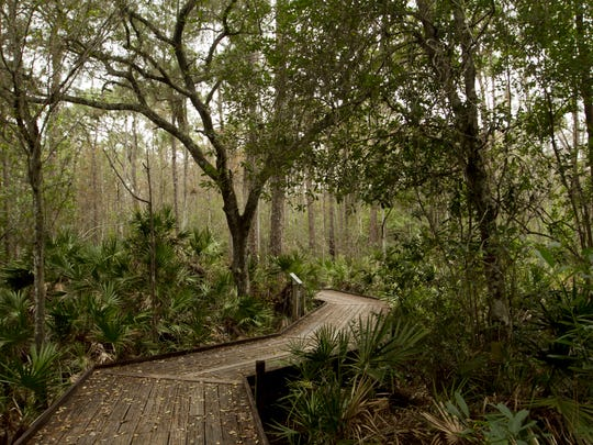 The boardwalk on the Cypress Loop trail at the Calusa Nature Center leads through different habitats including wetlands with cypress and pine flatwoods.