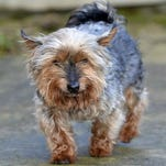 Oldest dog in the UK savaged to death in attack