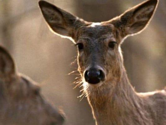 stock photo deer