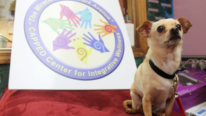 Jojo, a five to seven year old Chihuahua, is one of many dogs at Animal Village looking for a forever home. CAPPED is stepping up to help Animal Village by donating the proceeds from their upcoming John Denver tribute concert on Oct. 22.