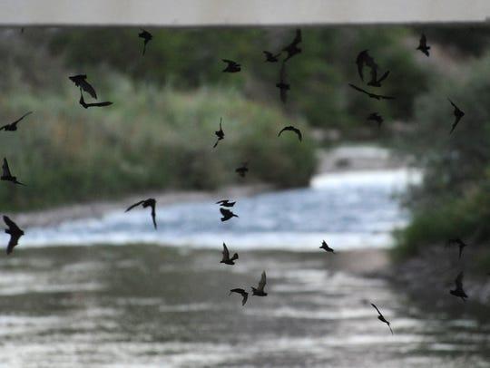 REN0817 Bats 05.jpg