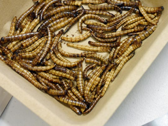 Roasted mealworms ready to be eaten at the Staunton Parks and Recreation Department's program on insect eating at Montgomery Hall Park on Tuesday.