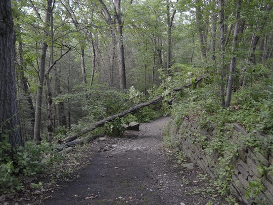 A fallen tree lays over a trail off the south entrance.