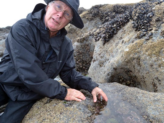 Charles Getter leads a free tide pool clinic.