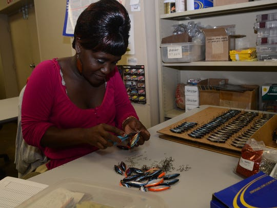ANI Bill Lewis Lures Marie Bundu, an assembly technician at the local company Bill Lewis Lures, installs hooks on a lure Thursday, Jan. 22, 2015. Bill Lewis Lures was awarded a prestigious grant from Chase Bank.-Melinda Martinez/mmartinez@thetowntalk.com The Town Talk Gannett