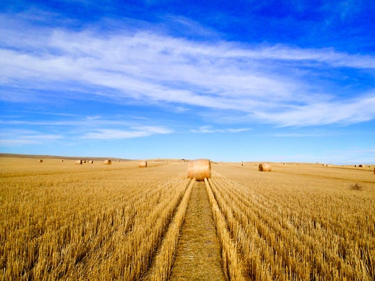 A Montana hay field captured by Ken Ilgunas on his trek from Alberta to Texas along the route of the proposed Keystone Pipeline.