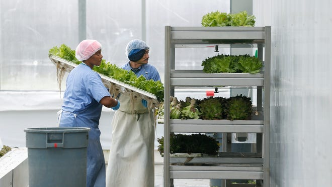 Sharla Coleman and Don Ray working at Green City Growers in Cleveland, OH.