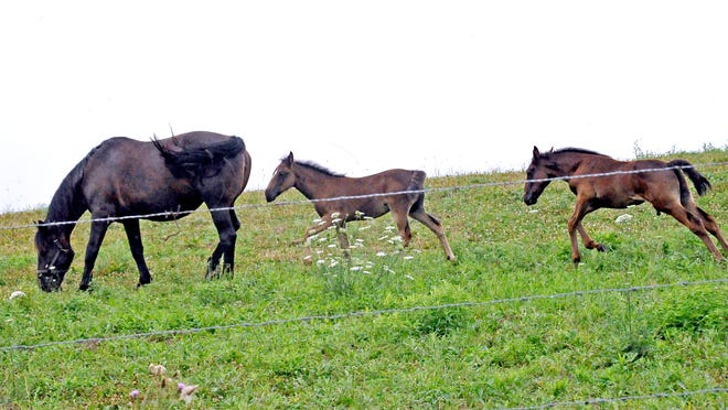 This horse and a pair of young ones explore this field southeast of Kidron.