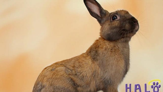 Aren't I am handsome young fellow? Come get me -- ask for Mr. Bun Bun.